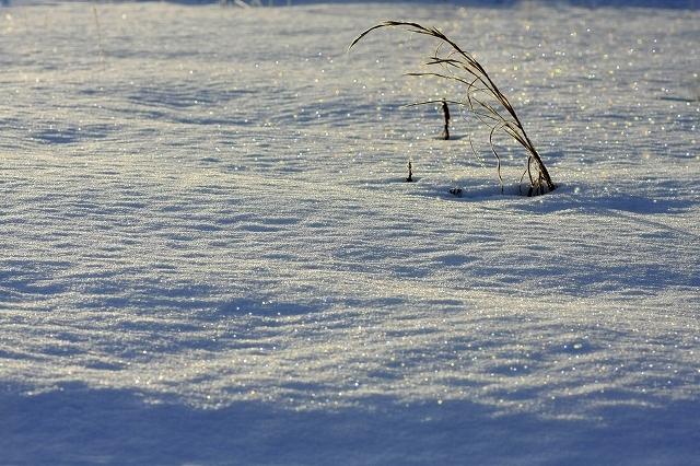 星屑の光る雪原
