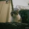 江ノ島の猫#6