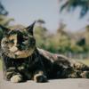 江ノ島の猫#2
