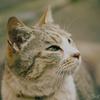 江ノ島の猫#8