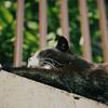 江ノ島の猫#3