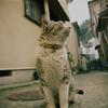 江ノ島の猫#7