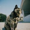 江ノ島の猫#1