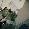 江ノ島の猫#5