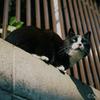 江ノ島の猫#4