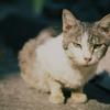 江ノ島の猫#9