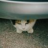 江ノ島の猫#11