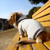 冬のお散歩、黄色いベンチで休憩中