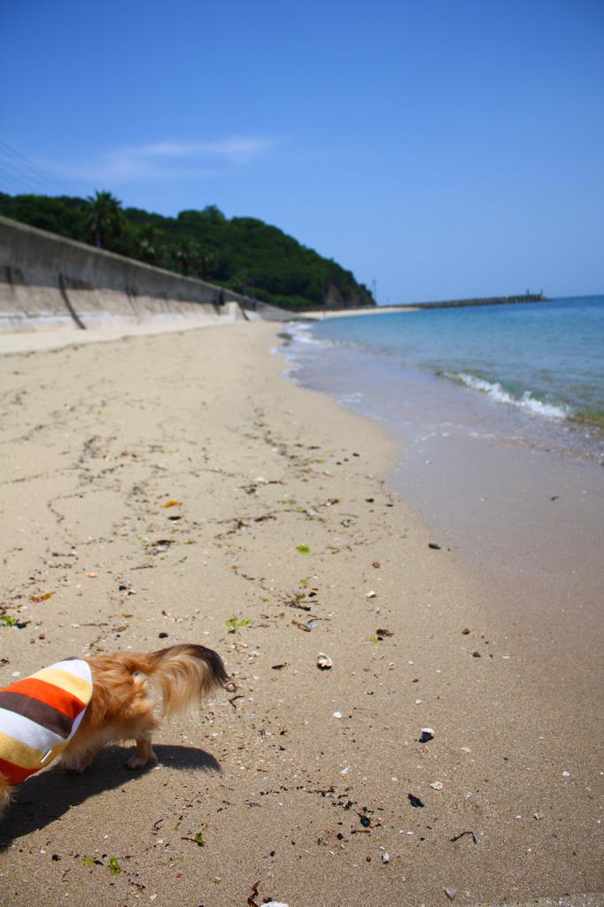 夏はやっぱり海だから