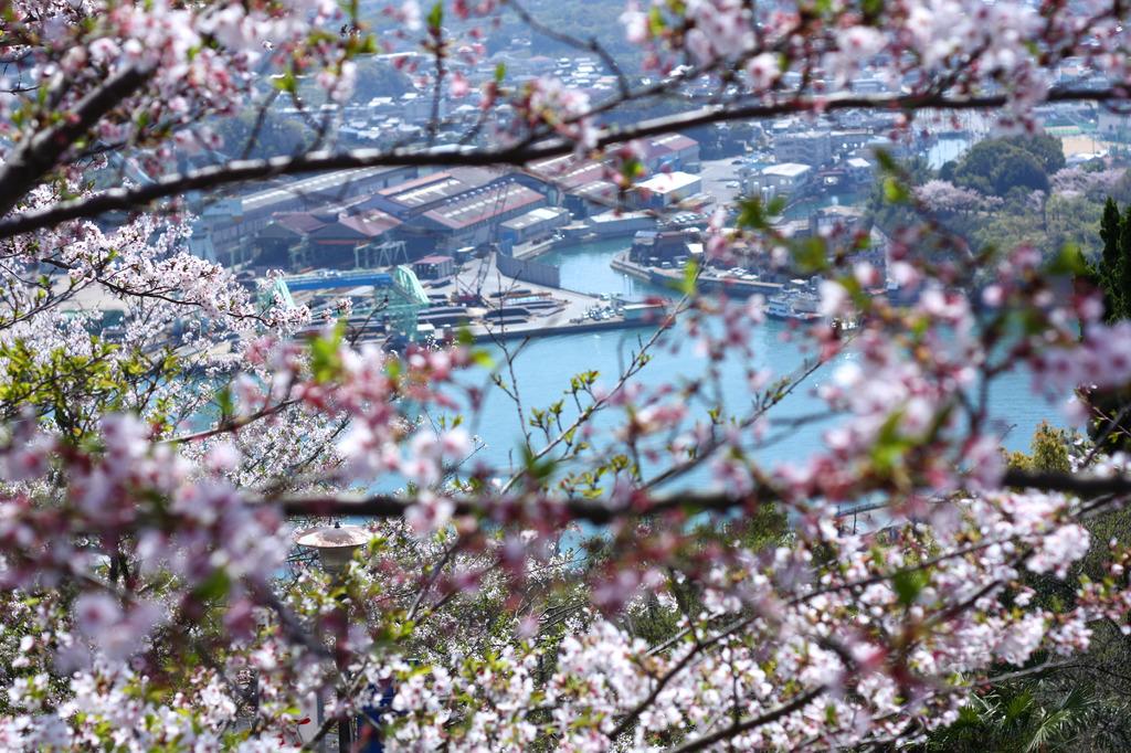 桜の向こうで、働いてます!