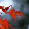 三郎の滝、紅葉にはまだ遠い?