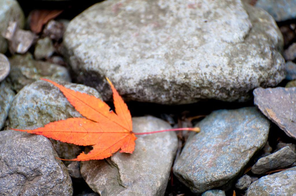 秋の落とし物