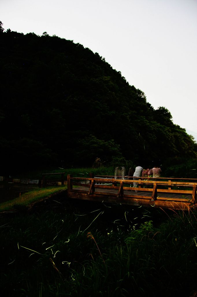 蛍の郷-4