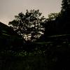 ホタル公園2009.6.24(山梨 下部温泉)3