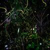 螢の棲む杜へようこそ-其の参