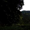 ホタル公園2009.6.24(山梨 下部温泉)1