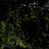 螢の棲む杜へようこそ-其の壱