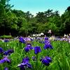 Iris in forest