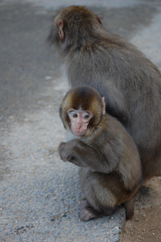 高崎山のお猿さん