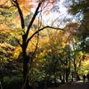 紅葉の山道