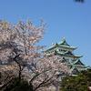 桜と名古屋城