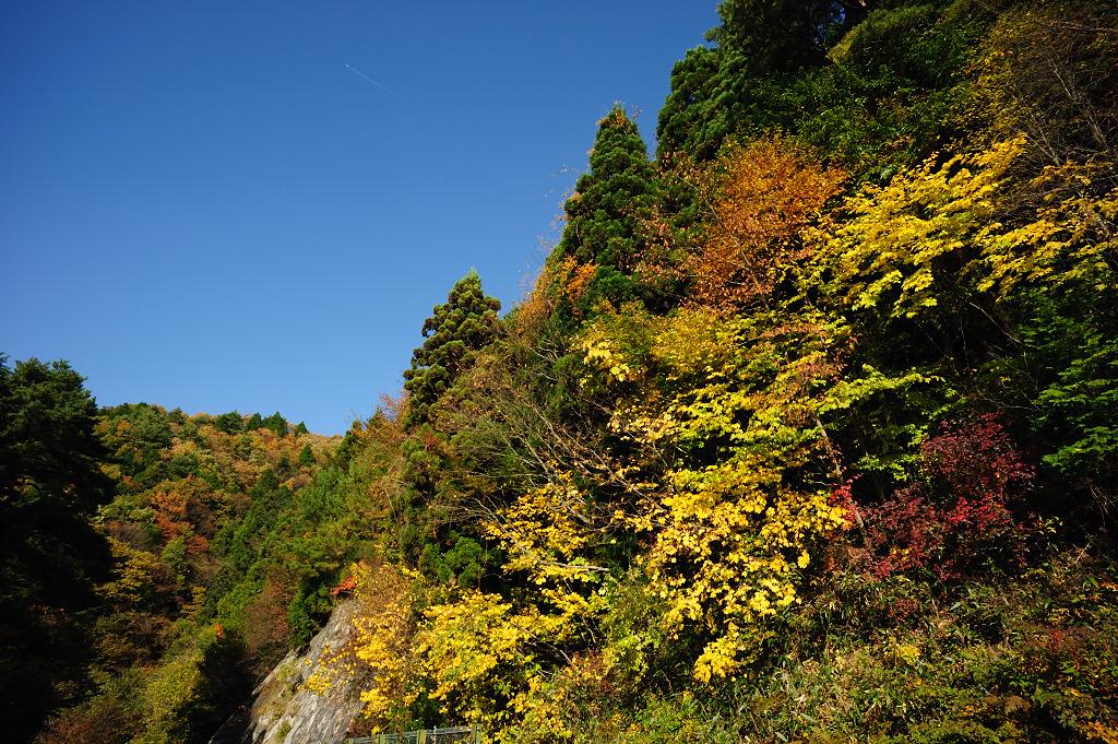 茶臼山の秋