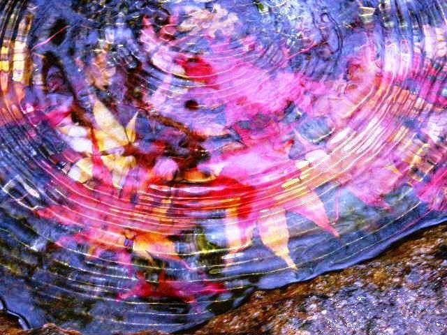 一期一会 水中紅葉