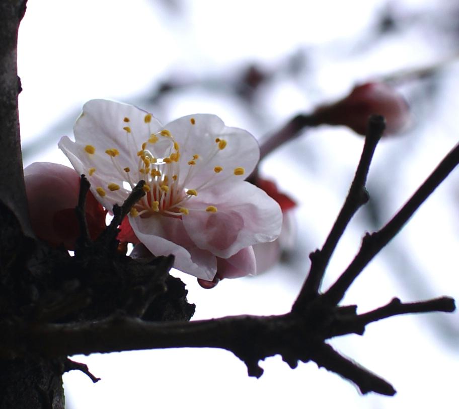 水滴を抱えた花