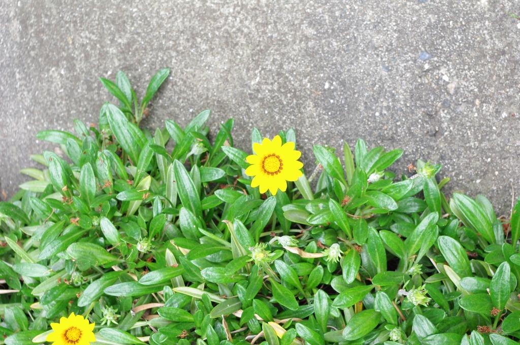 a flower like a object