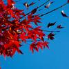 新宿御苑(2009/12/4)