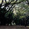 新宿御苑(2009/11/8)