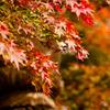 2010年11月_新宿御苑_02