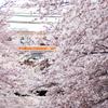 2012年4月7日 桜