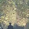 2013年11月17日_新宿御苑