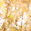 2010年11月_新宿御苑_05