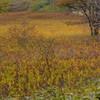 静穏の湿原