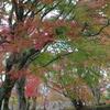 岡城阯の紅葉(大分県)