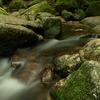 屋久島。白谷雲水峡にて。この水ゲキウマ。
