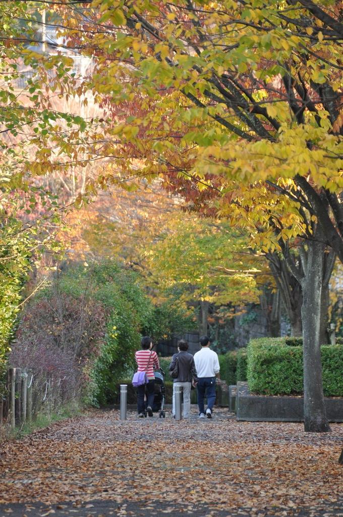 紅葉お散歩