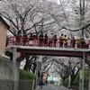 桜坂2010