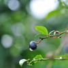 wet berry