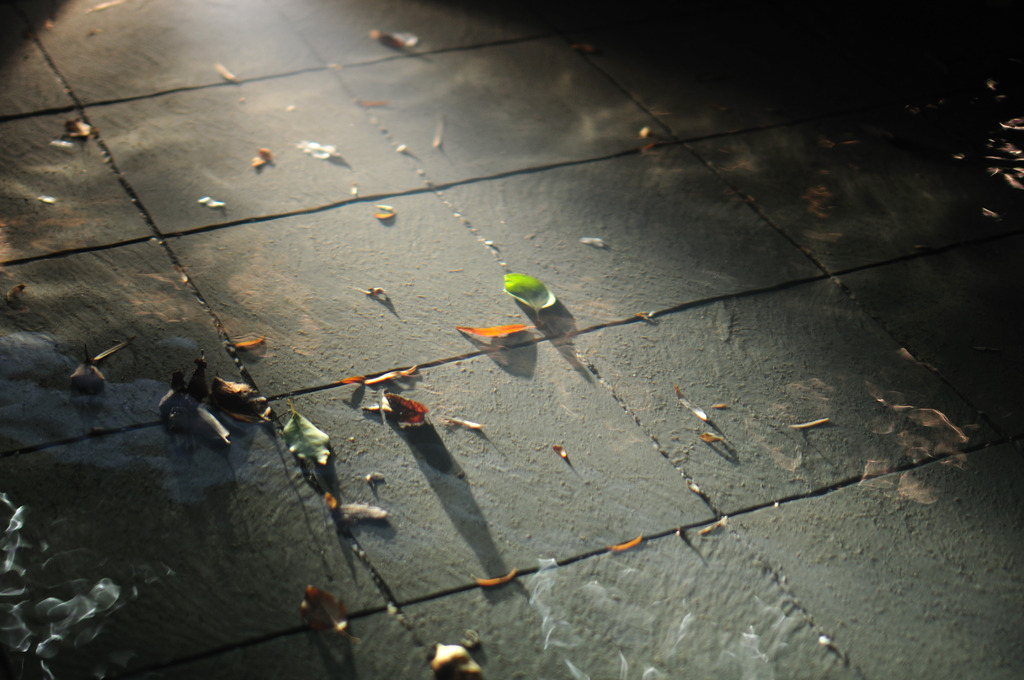 ゆらゆら落ち葉