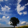 語りかける木
