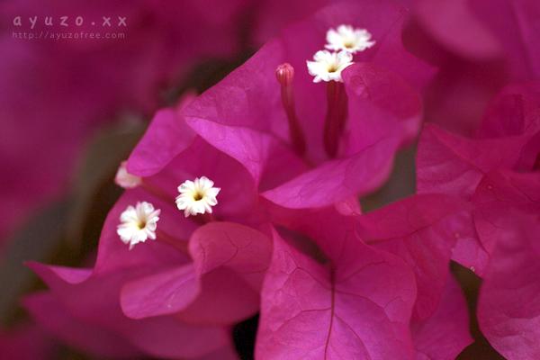 小さな白い花が…