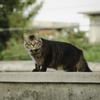 ニヒル猫。