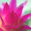 サボテンの花 4