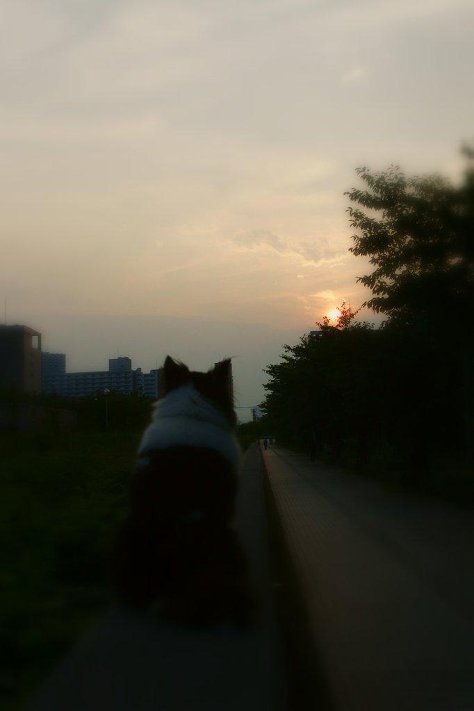 Sentimental dog.