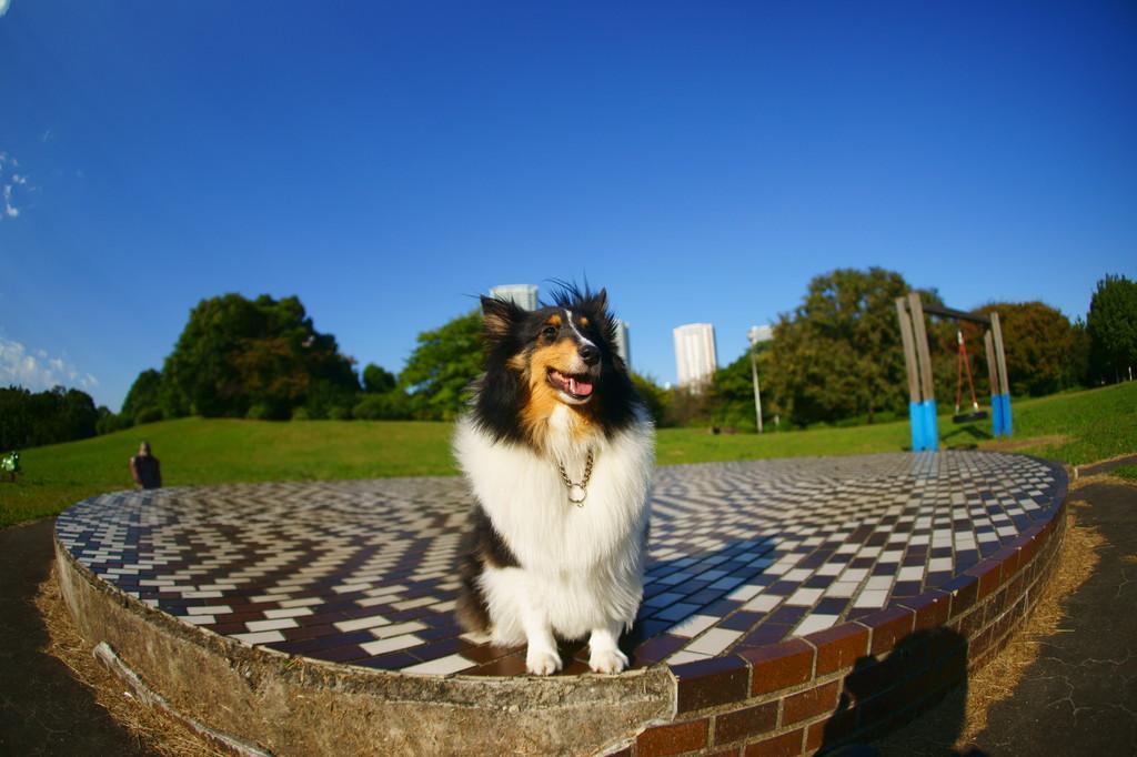 Smiling dog.