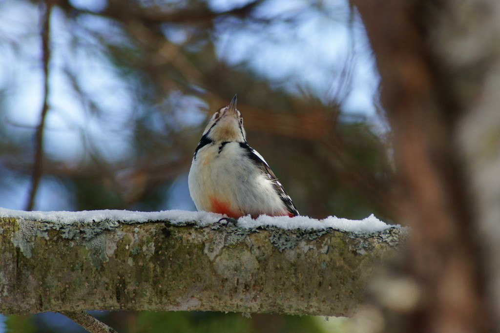 The little bird which waits for spring