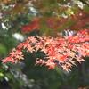 紅葉・筑波山